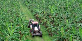 Buscan trabajadores agrícolas para finca en Santa Isabel