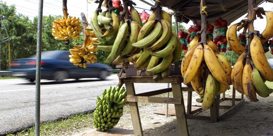 La producción de plátanos alcanzaría entre un 75% y un 80% del nivel previo al huracán María para fines del 2018. (horizontal-x3)