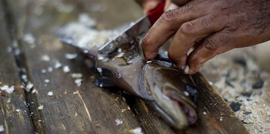Salud Alerta Sobre Pescados Que Podrían Causar Ciguatera El Nuevo Día