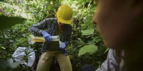 Los huracanes Irma y María crean una oportunidad única para científicos en El Yunque