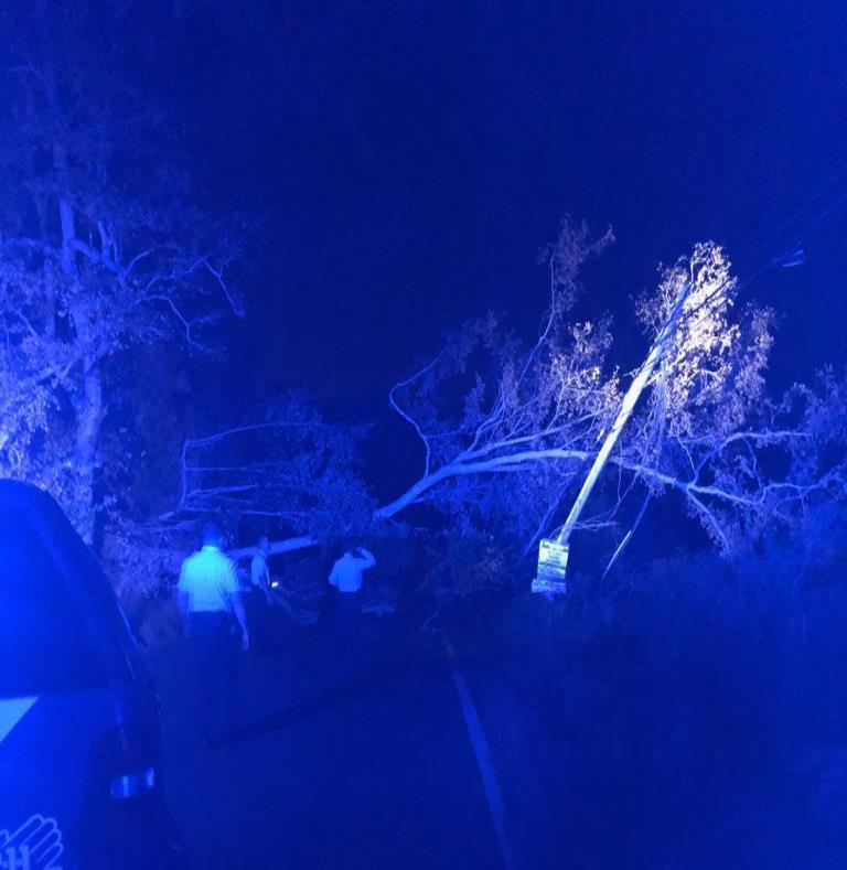 Personal de Manejo de Emergencias se encargo de remover el árbol.  (Suministrada / Policía) (semisquare-x3)