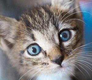 Alto a la indiferencia hacia el maltrato animal