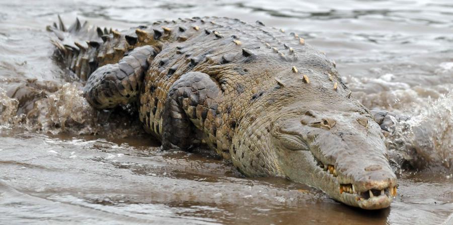 Los ataques de cocodrilos son comunes en la parte sur de Palawan (horizontal-x3)