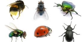 Los insectos están desapareciendo y les preocupa a los científicos