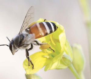La aniquilación de las abejas y otros polinizadores