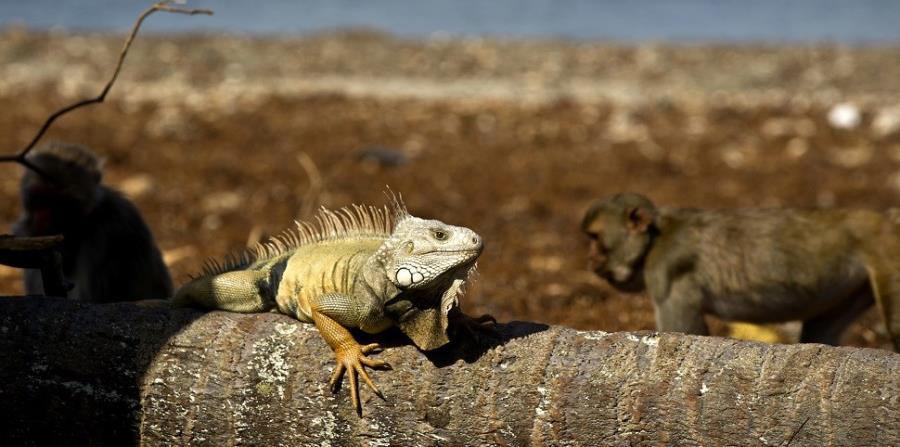 El nuevo atlas de reptiles cubre más de 10,000 especies de serpientes, lagartos y tortugas. (AP) (horizontal-x3)