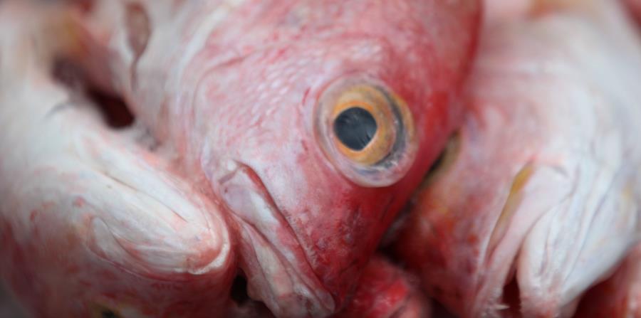 Actualmente, el producto importado de pesca en la Isla asciende a más del 90% del consumo local. (horizontal-x3)