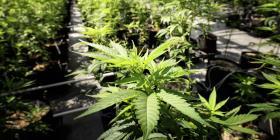 La equidad social es tema clave en legalización de marihuana
