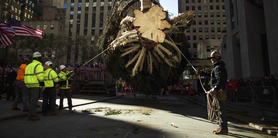 Una grúa levanta el árbol de Navidad del Rockefeller Center para colocarlo en el Rockefeller Plaza, en Nueva York, el sábado 11 de noviembre del 2017. (horizontal-x3)