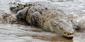 Un hombre nada durante 54 días en un lago lleno de cocodrilos y sale ileso