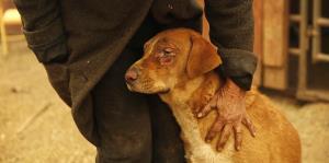 Rescatistas luchan por salvar a los animales del fuego en California