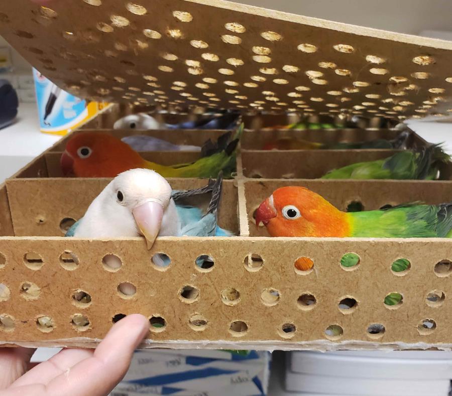 La importación de aves vivas requiere un permiso del Departamento de Agricultura de Estados Unidos. (Suministrada) (semisquare-x3)