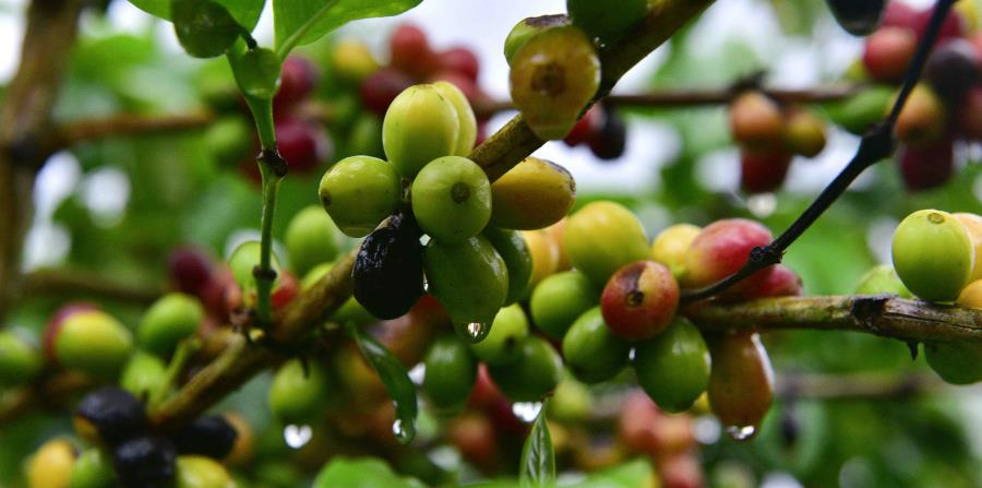 La comunidad científica sabe que el cambio climático causará cambios en los cultivos y en las especies polinizadoras, lo que tendrá consecuencias en la disponibilidad de alimentos y en la economía de los pequeños productores. (horizontal-x3)