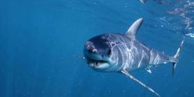 Familia sufre espeluznante encuentro cercano con tiburón en Massachusetts