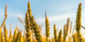Intolerancia al gluten puede derivar en cáncer de no tratarse adecuadamente