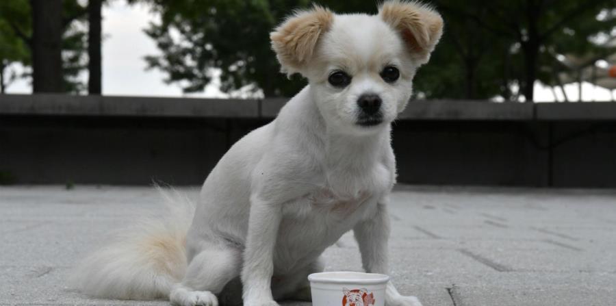 Los científicos llegaron a esa conclusión después de varias pruebas con un grupo de perros de distintos sexos (horizontal-x3)