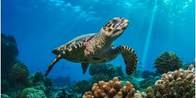 El cambio climático reducirá la vida marina en un 17% para fin de siglo