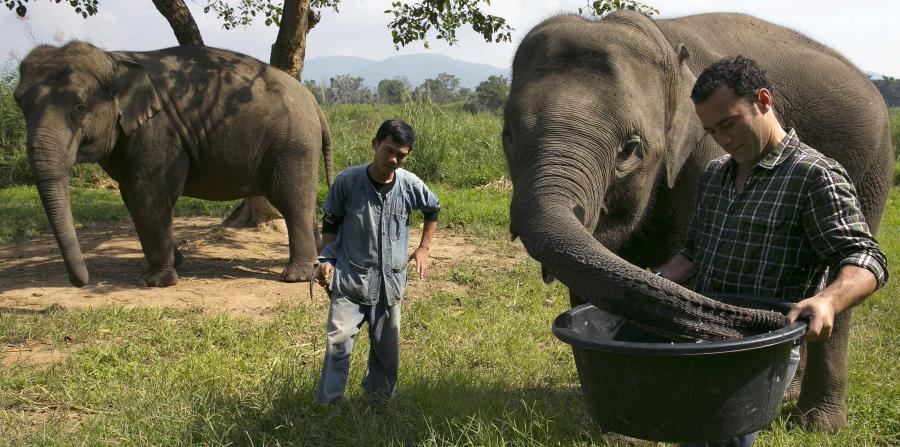 Imagen de un elefante mientras se come los granos de café. (horizontal-x3)