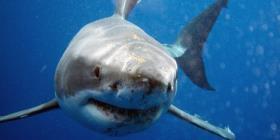 Muere una mujer en Bahamas tras ser atacada por un tiburón