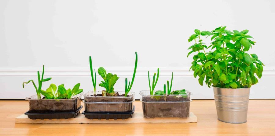 Plantas de huerto casero (horizontal-x3)