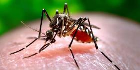 Autoridades en Florida exhortan a tomar precaución tras dos nuevos casos de dengue