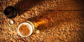 Una granja urbana usa granos de cerveza para cultivar hongos