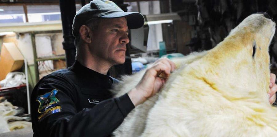 Un agente del Interpol recuperó el cuerpo de un oso polar en Canadá. (AP) (horizontal-x3)