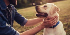 Coronavirus y mascotas: el peligro de higienizarlas con hand sanitzer