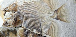 Hallan los restos de una piraña que aterrorizaba a los animales acuáticos del Jurásico