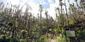 Un largo camino a la restauración de El Yunque