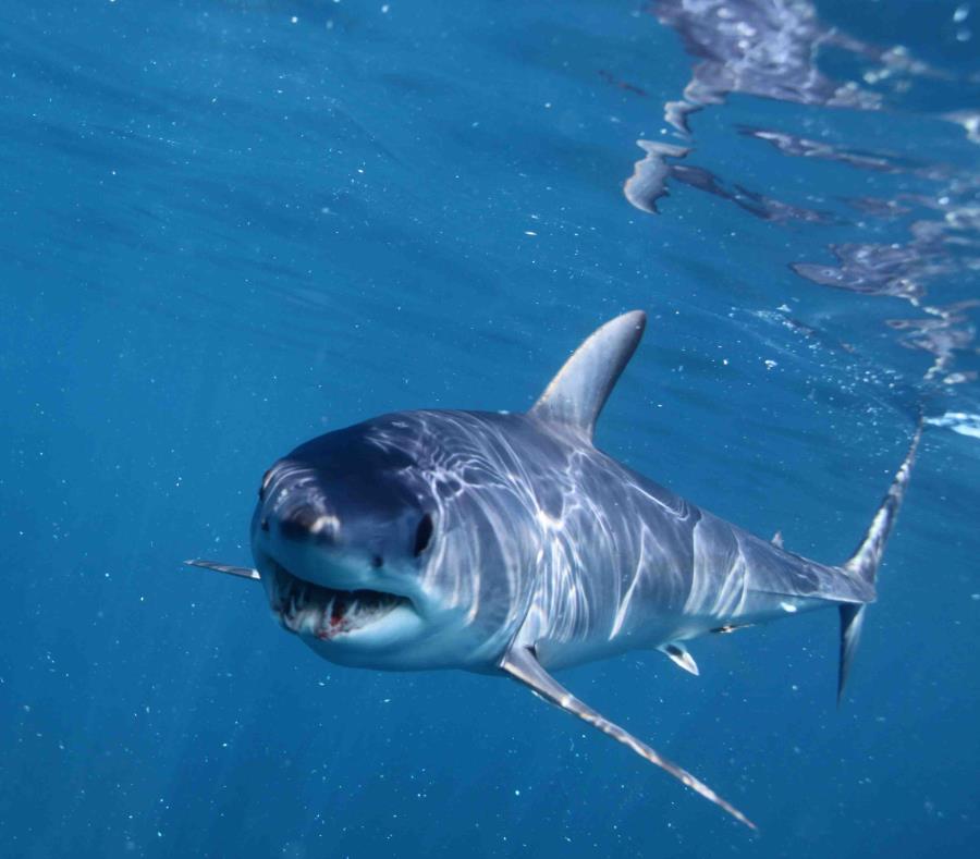 #Video Tiburón asusta a familia y se roba su pesca