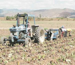 Las ayudas a los agricultores son parte del Código de Incentivos