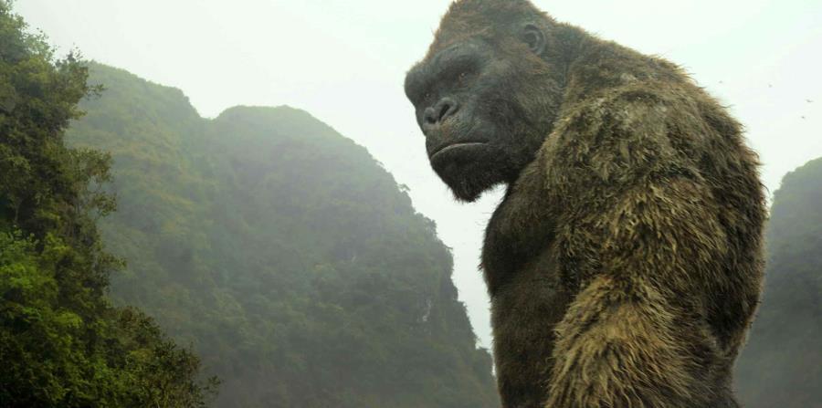 gorila gigante (horizontal-x3)