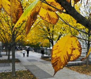Estudio revela que árboles de la ciudad crecen más rápido que en bosques