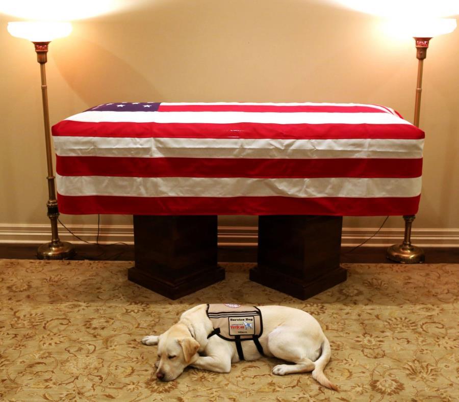 Sully permaneció acostado frente al ataúd del expresidente Bush. (AP) (semisquare-x3)
