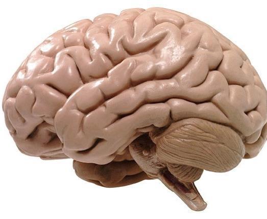 El cerebro es el que construye el dolor de otras partes del cuerpo ...