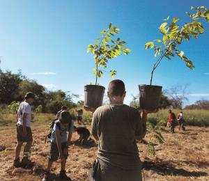 Reforestar a Puerto Rico