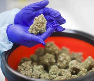 ¿Cannabis medicinal como motor del turismo?