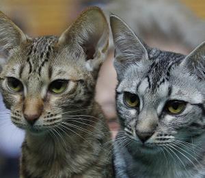 Ministerio de Exteriores francés adopta dos gatos para atrapar ratones