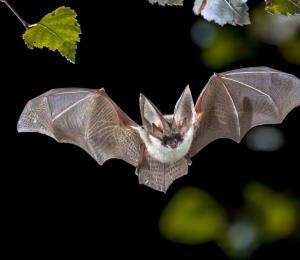 Murciélagos y serpientes estarían detrás del origen del coronavirus