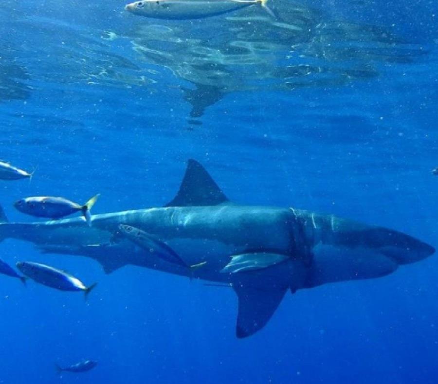Las aguas cercanas al puerto de Darwin albergan gran cantidad de tiburones y cocodrilos. Incluso, la mayoría de las playas cercanas a la ciudad no son aptas para bañarse, ni acampar. (semisquare-x3)