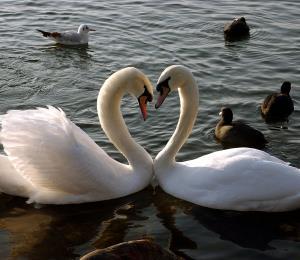 Coro de aves seductoras