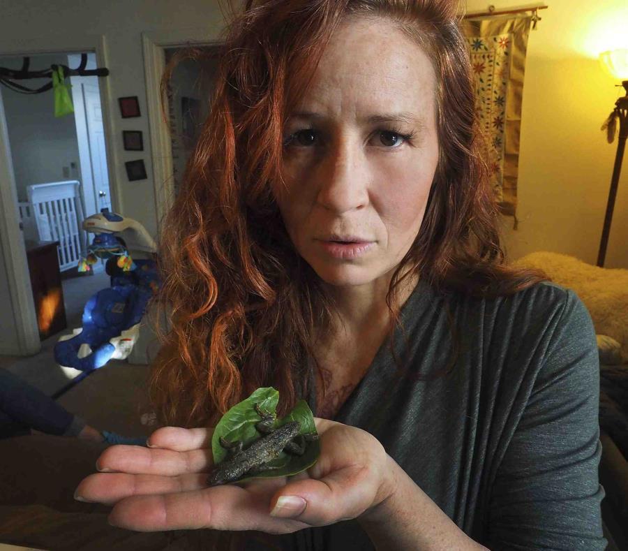 Mujer casi se come lagartija que halló en empaque de lechuga