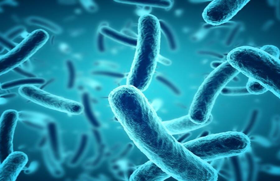 Descubren una bacteria de aguas profundas con un metabolismo nunca antes visto