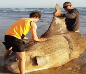 Pescadores descubren un enorme ejemplar del que se sabe muy poco