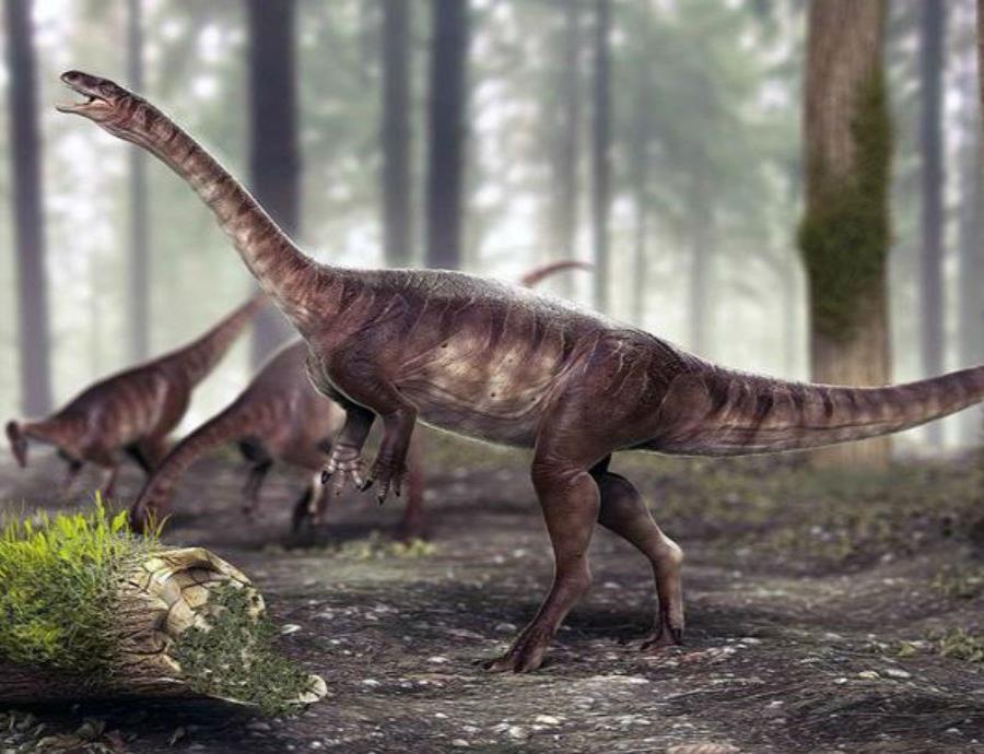 Descubren en Brasil el dinosaurio de cuello largo más antiguo del mundo (semisquare-x3)