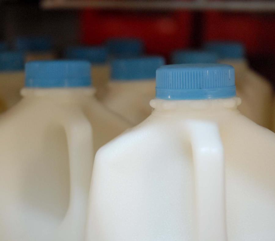 La industria de la leche en el 2016 vendía sobre 240 millones de cuartillos anualmente. (GFR Media) (semisquare-x3)