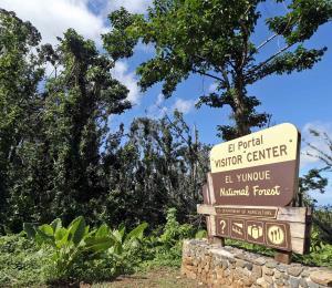 Celebrarán el Día Internacional de los Bosques en El Yunque