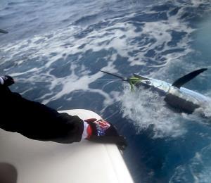 Suerte, sudor y agua salada: así es un día de pesca deportiva en alta mar
