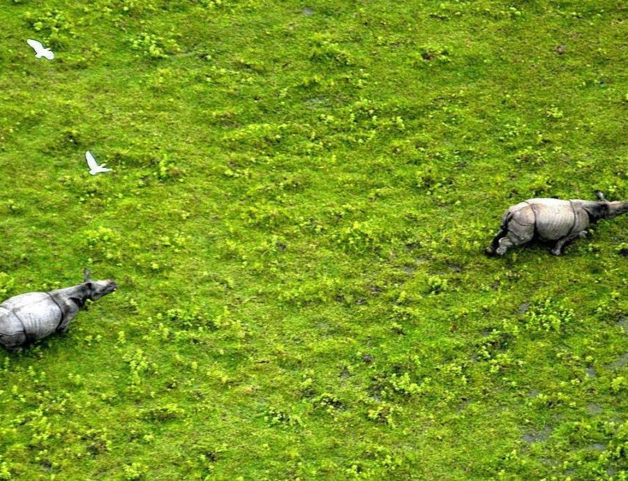 Combatirán la cacería furtiva de rinocerontes con sofisticados drones en la India (semisquare-x3)
